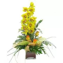 orchid cymbidium yellow