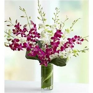 purplewhite orchids 20