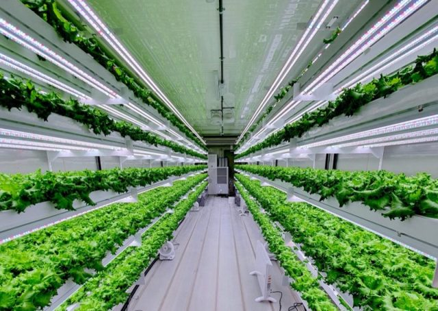 Smart Acres Vertical Farming Company Set To Launch in UAE