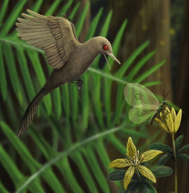 Smallest ever dinosaur discovered