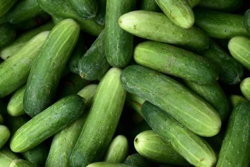 Cucumber Day returns for the fourth year in a row to Dubai