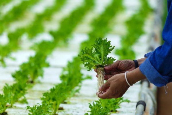 UAE FoodTech Challenge announces top 12 finalists