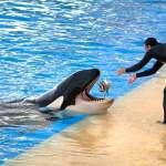 Duabi Dolphinarium