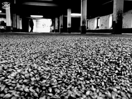 Malting floor at the Laphroaig distillery
