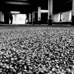 Malting floor at the Laphroaig distillery