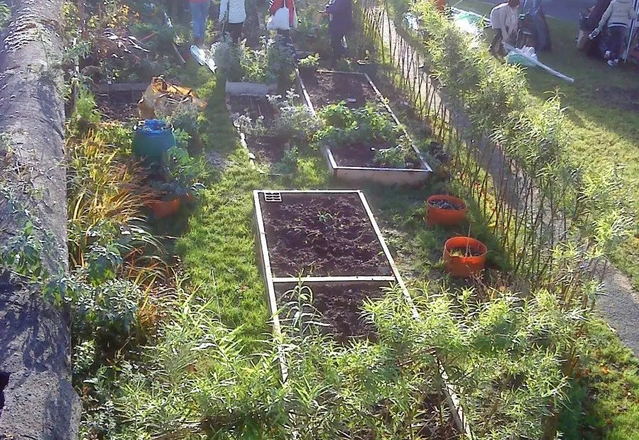 Overall view of the area where a bottle greenhouse is built