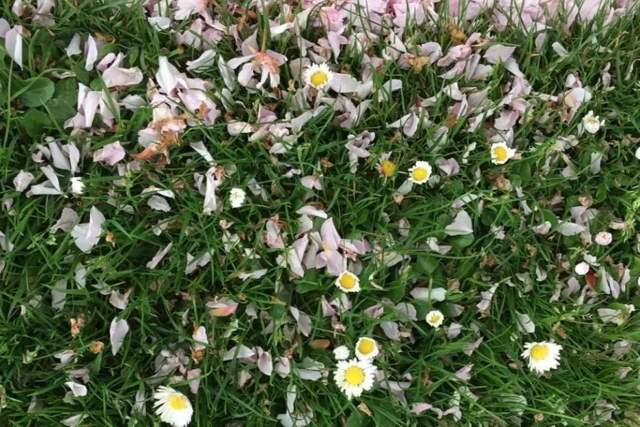 Wild flowers and petals on grass