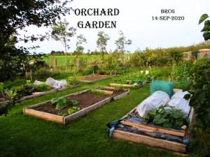 Baldoyle Comunity Garden raised bedss