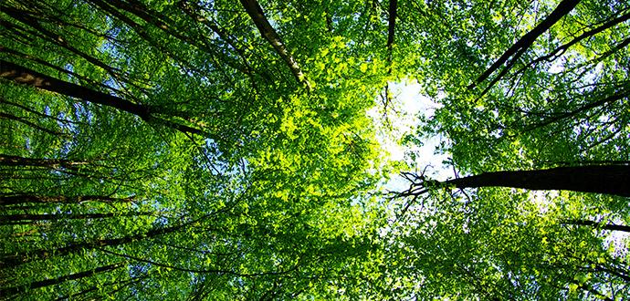 Global Environmental Governance Syllabi – Open Thread