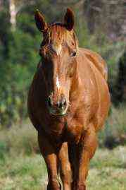 Animals For Kids Horse