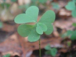 photo credit: Four leaf clover via photopin (license)