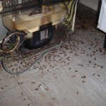 cockroach treatment in Dudley West Midlands