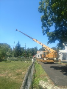 crane after removing a tree