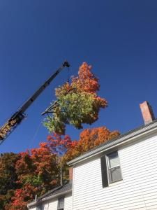 crane removing a tree during the fall