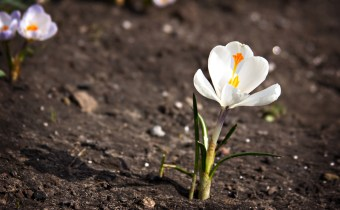 flower growing out of the ground