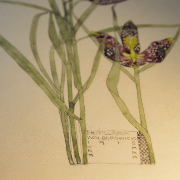Charles Rennie Mackintosh - Fritillaria detail from Duille
