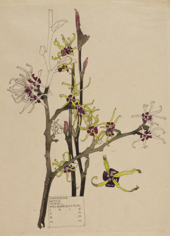 Charles Rennie Mackintosh - Japanese Witch Hazel Art Card from Duille