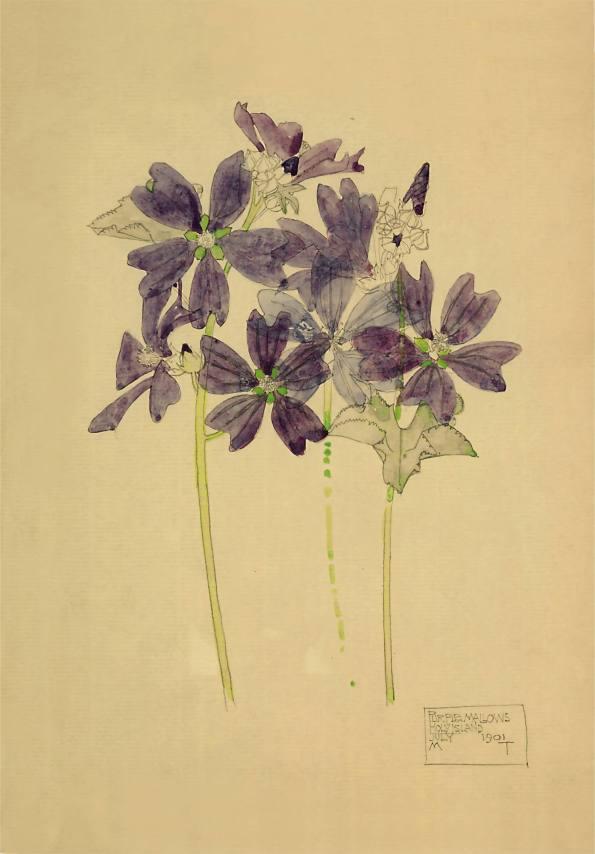 Purple Mallows, Holy Island. Charles Rennie Mackintosh.