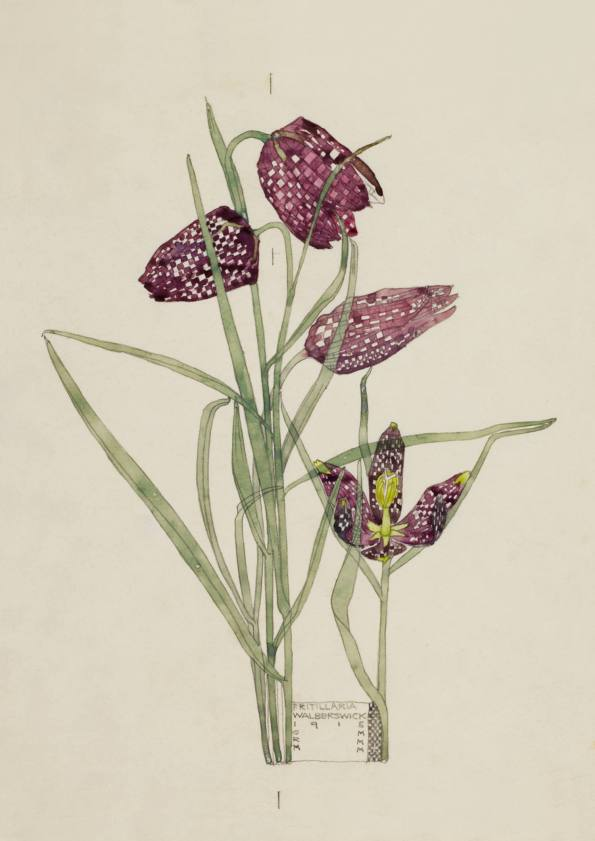 Fritillaria, Walberswick. Charles Rennie Mackintosh.