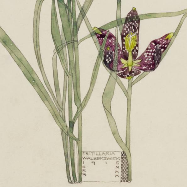 Detail: Fritillaria, Walberswick. Charles Rennie Mackintosh.