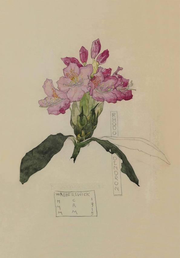 Rhododendron. Charles Rennie Mackintosh.