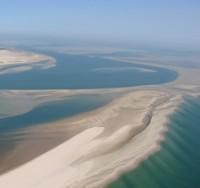 Invloed van zand en droogval op het menu van wadvogels
