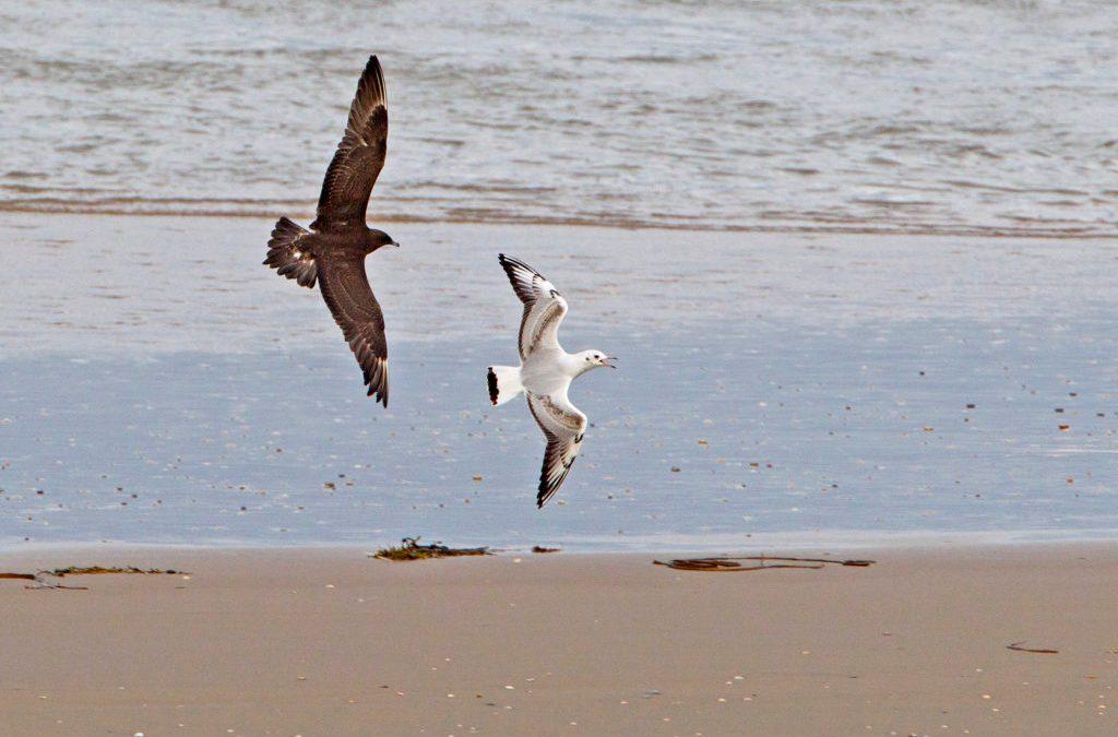 Trekkende zeevogels