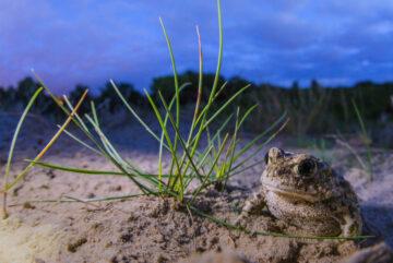 Fotografieworkshop in de duinen van Oostvoorne Zuid-Holland: 18 september, 8.30 tot 11.30