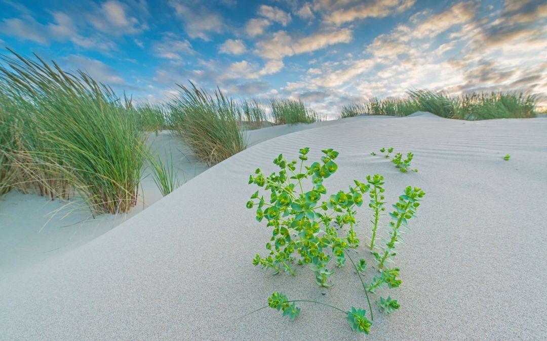 Drie stranden krijgen de Groene Strand Wimpel