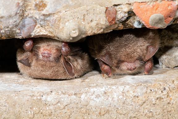 Oostkapelle: avondwandeling in vleermuizenbos  VOL