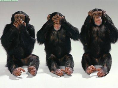 https://i1.wp.com/www.duiops.net/seresvivos/galeria/chimpances/Animals%20Chimpanzees_Hear%20No%20Evil,%20See%20No%20Evil,%20Speak%20No%20Evil.jpg?resize=396%2C296