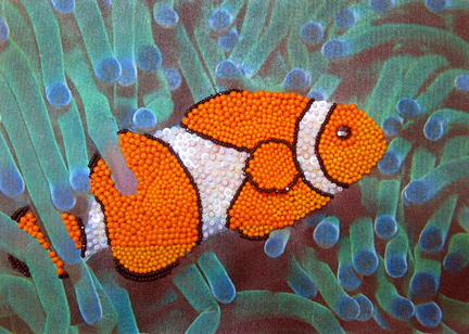 clownfish5-closeup