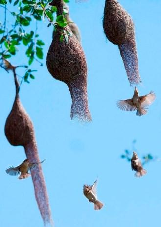 Chim dòng dọc