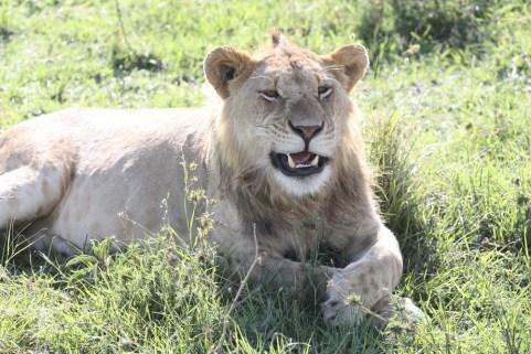 Chuyến đi săn nhớ đời ở Kenya