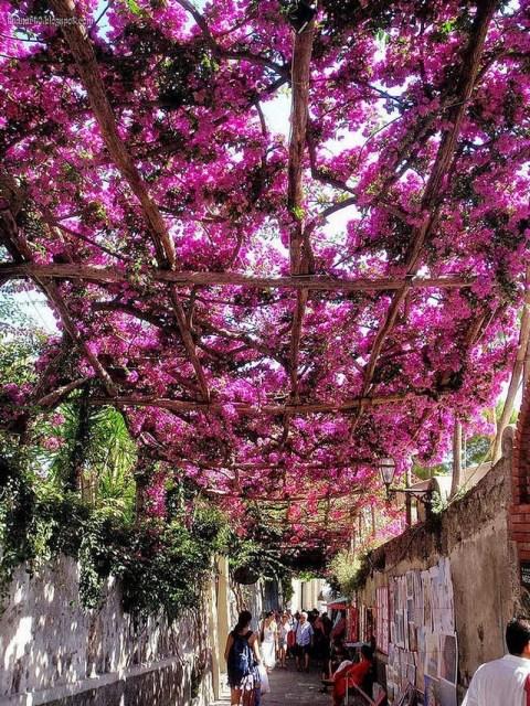 Đường hoa tuyệt đẹp ở Positano, Ý