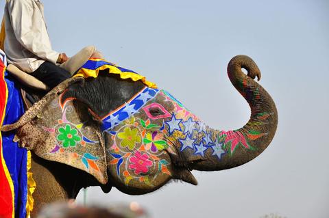 Lễ hội Voi Jaipur Ấn Độ