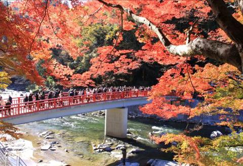 Du khách chiêm ngưỡng vẻ đẹp mùa thu ở thủ đô Tokyo.