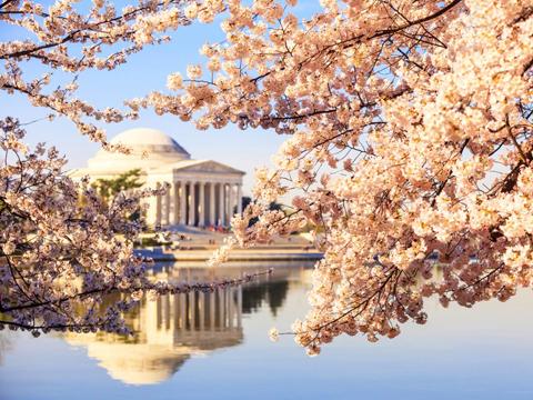 Lễ hội anh đào Jefferson Memorial
