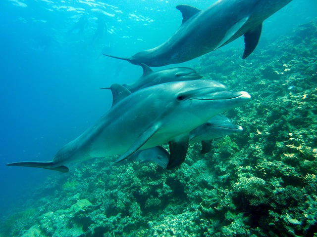 What Can Business Owners Learn From Blue Planet 2? - Dolphins