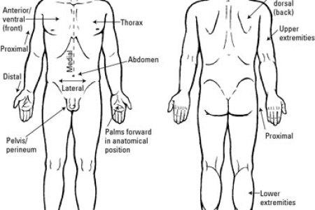 Interior Inferior Anatomical Definition Interior 4k Pictures 4k