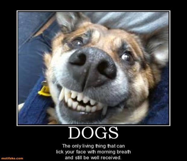 funny demotivational posters, funny animals, dogs
