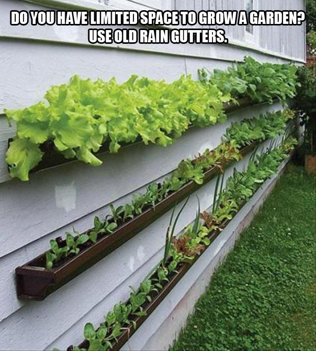 A use rain gutters to grow your garden