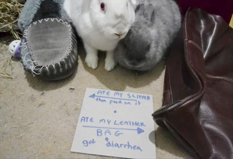 shaming (5)
