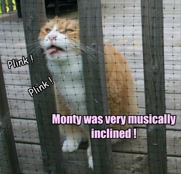 funny animals (12)