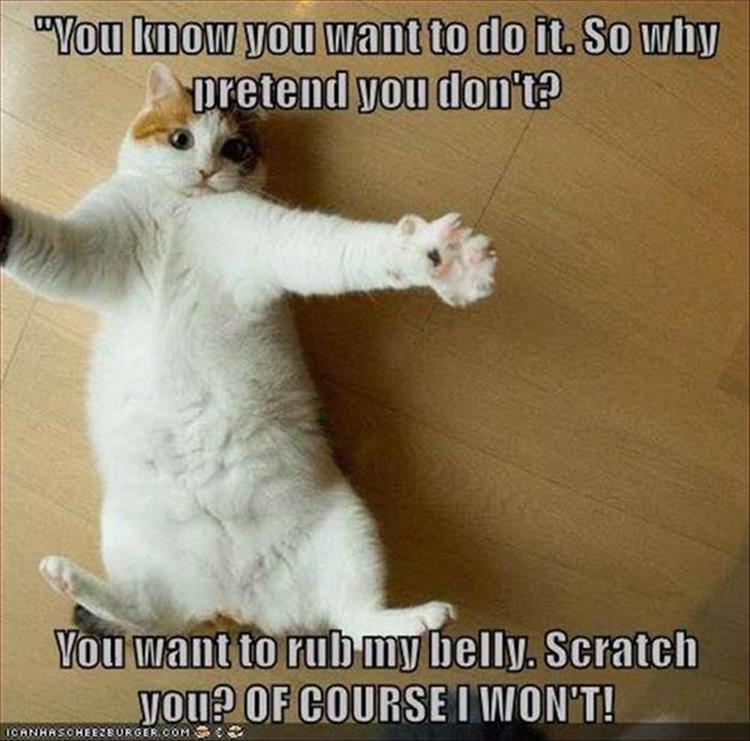 funny animal pictures (15)