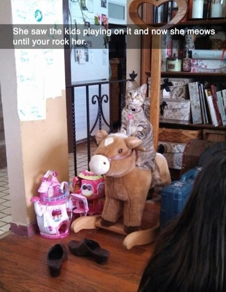 funny animals (5)