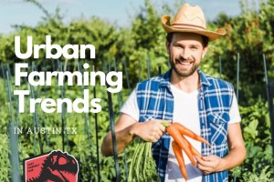 Austins-Urban-Farming-Trends