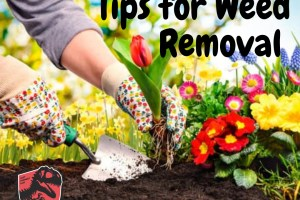 Tips-for-Weed-Removal-in-Central-Texas