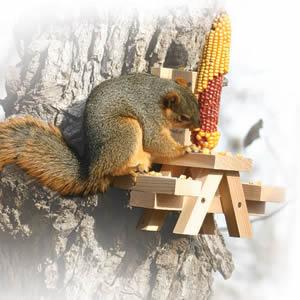 Duncraft Com Picnic Table Ear Corn Squirrel Feeder
