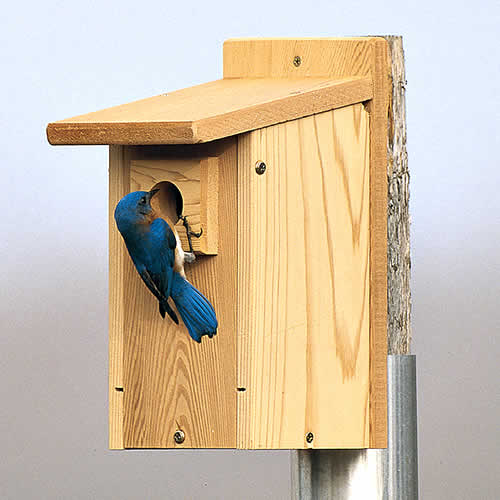 Bird House Hole Size What